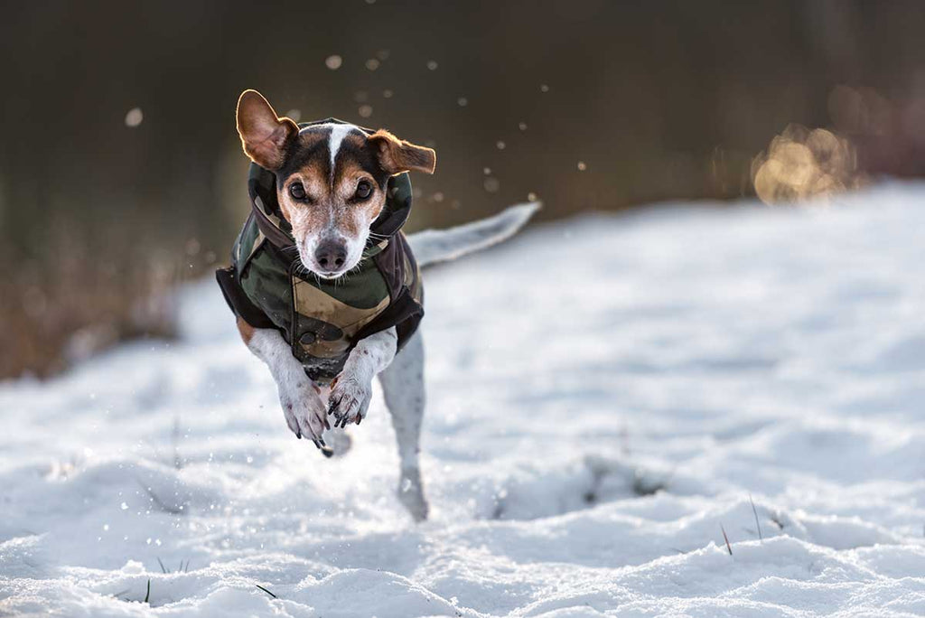 Emergency vets issue cold weather advice for pet owners
