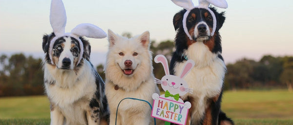 PurrfectlyYappy's Easter Egg Hunt