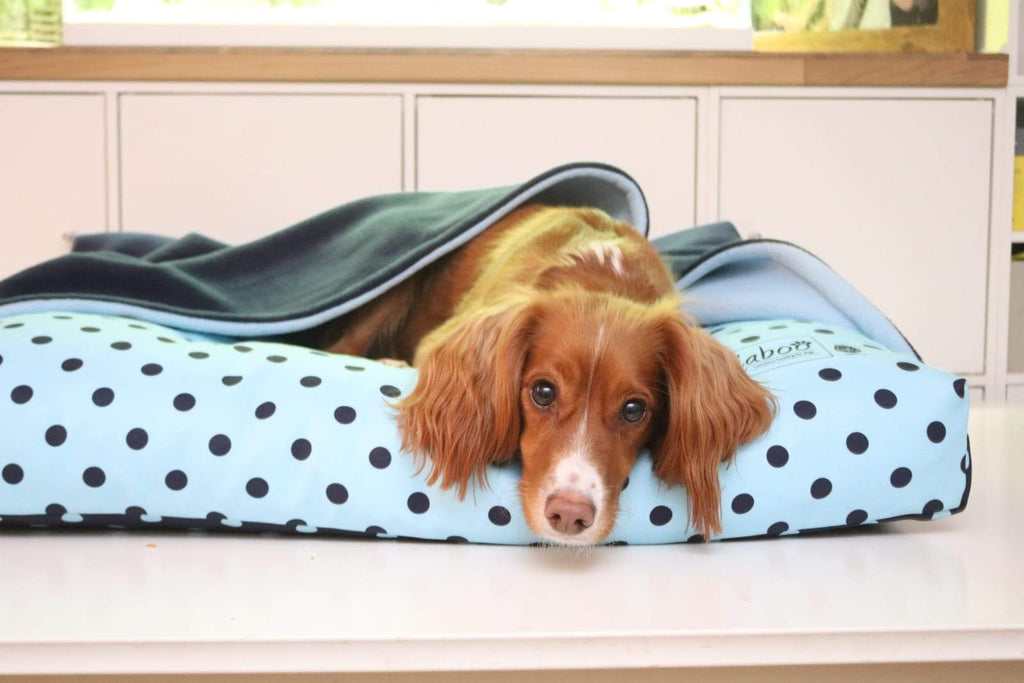 Miaboo Reversible 4 In 1 Spotty Burrow Bed 'Blue Is The Colour'