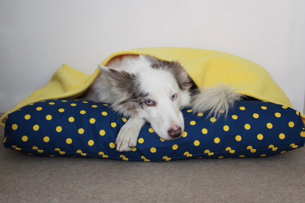 Miaboo Blue with Yellow Spot Burrow Bed