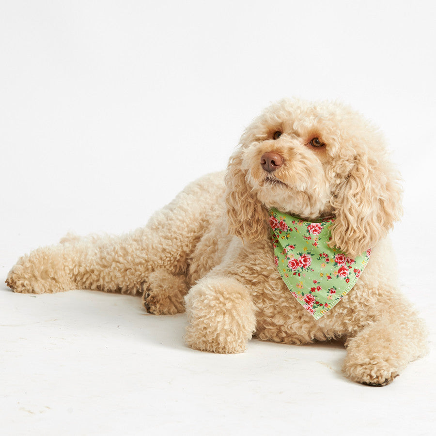 Pet Pooch Boutique Bandana in Green Vintage Flower - PurrfectlyYappy