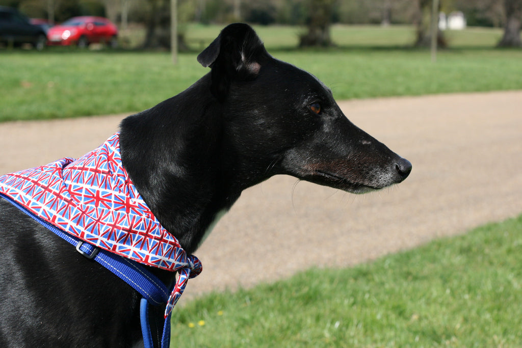Slumbering Hound Patriotic Bandana in Truly Great - PurrfectlyYappy