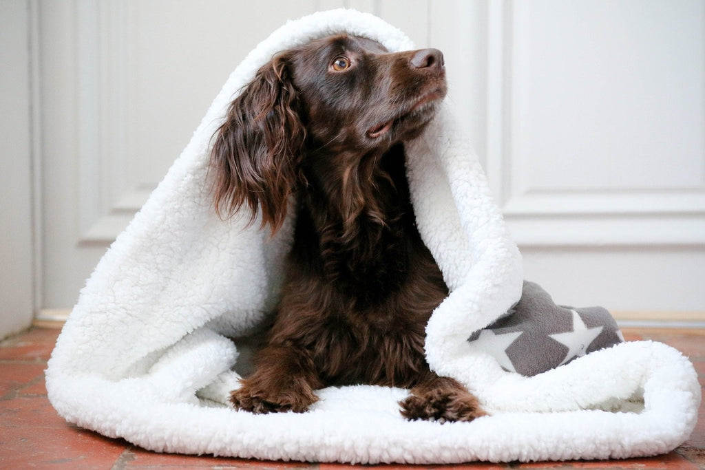 Slumbering Hound Dog Snuggle Sack in Grey