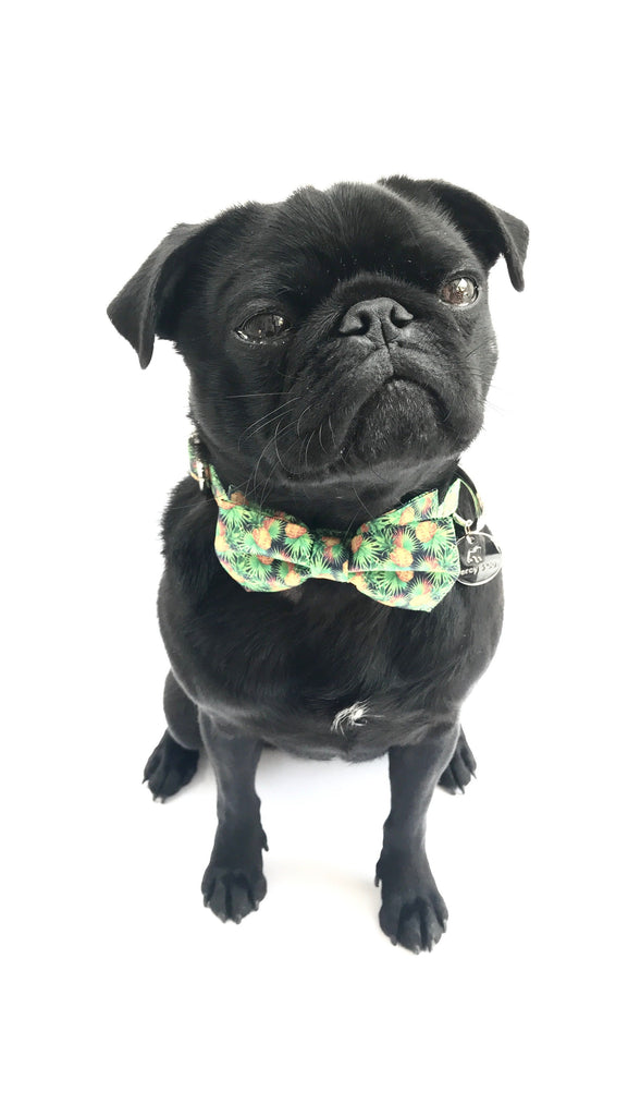 Percy & Co. Dog Collar Bow Tie in The Alderley - PurrfectlyYappy