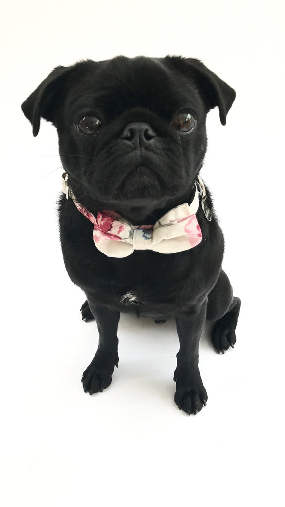 Percy & Co. Dog Collar Bow Tie in The Disley - PurrfectlyYappy