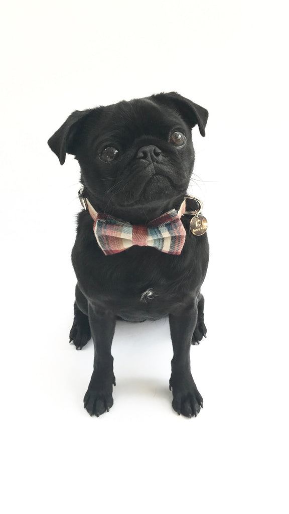 Percy & Co. Dog Collar Bow Tie in The Marple - PurrfectlyYappy