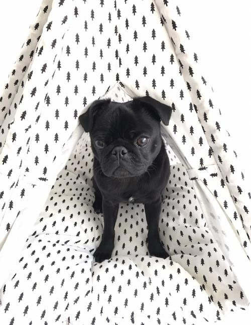 Percy & Co. Dog Teepee in Balmoral - PurrfectlyYappy