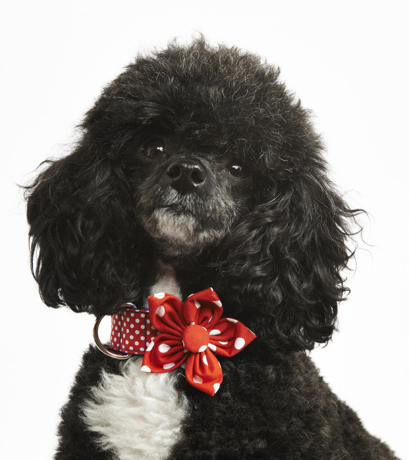 Pet Pooch Boutique Flower Collar Accessory in Red Polka Dot - PurrfectlyYappy