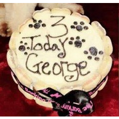 The Barking Bakery Dog Birthday Cake in White - PurrfectlyYappy