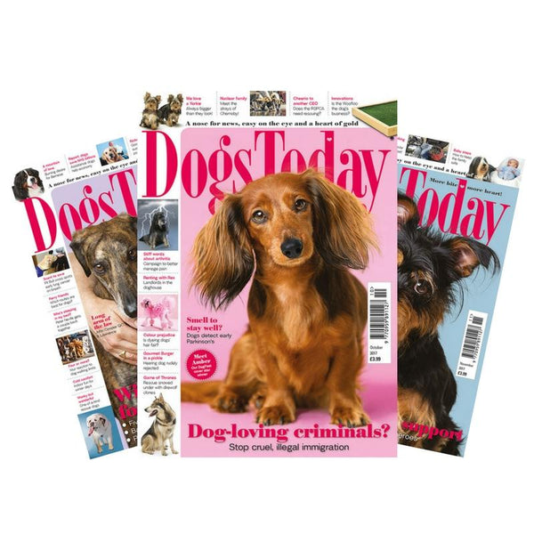 Dogs Today Magazine Subscription (UK only) - PurrfectlyYappy