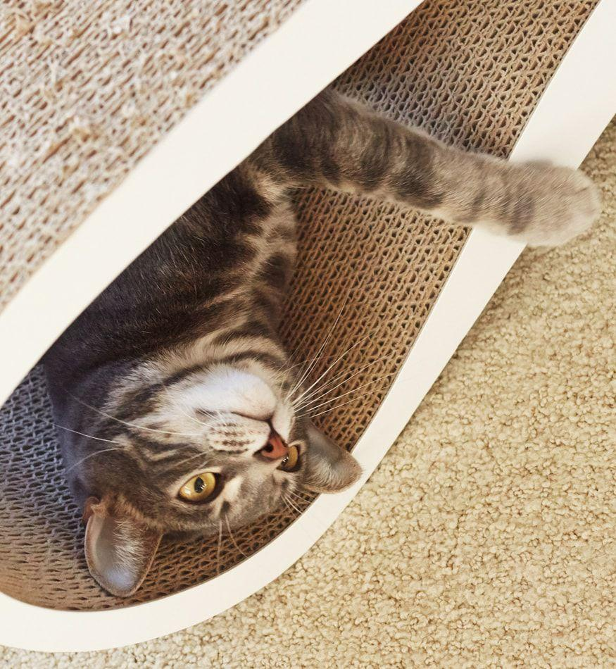 MyKotty Lui Cardboard Cat Scratcher In White