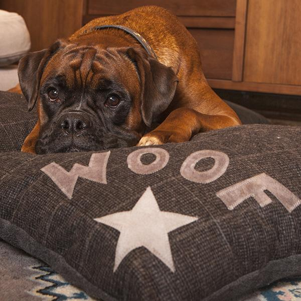 Creature Clothes Star Woof Jack Tweed Doza Dog Bed - PurrfectlyYappy