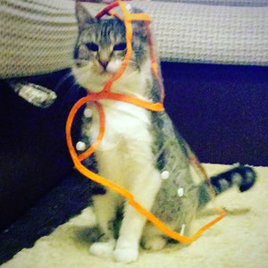 Transparent Cat Raincoat