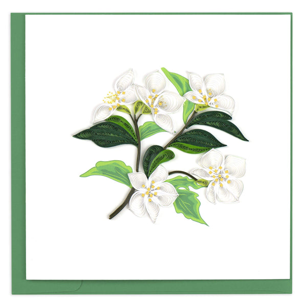 White flowers with yellow centers and dark green leaves