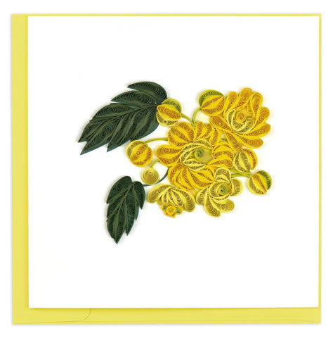 Golden yellow flowers with dark green leaves.