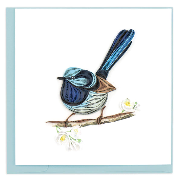 Blue Fairywren perched on a branch with white flowers