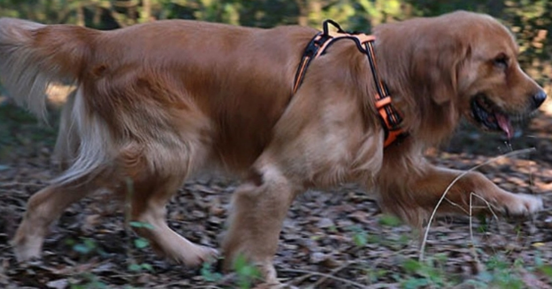 Harnesses for better Dog Walking