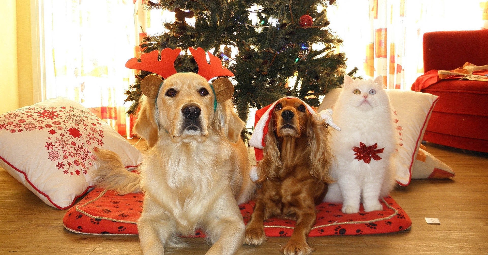 Our 2016 Pet Holiday Gift Guide