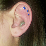 Turtle Cartilage 16ga Tragus Helix Earring Body Jewelry