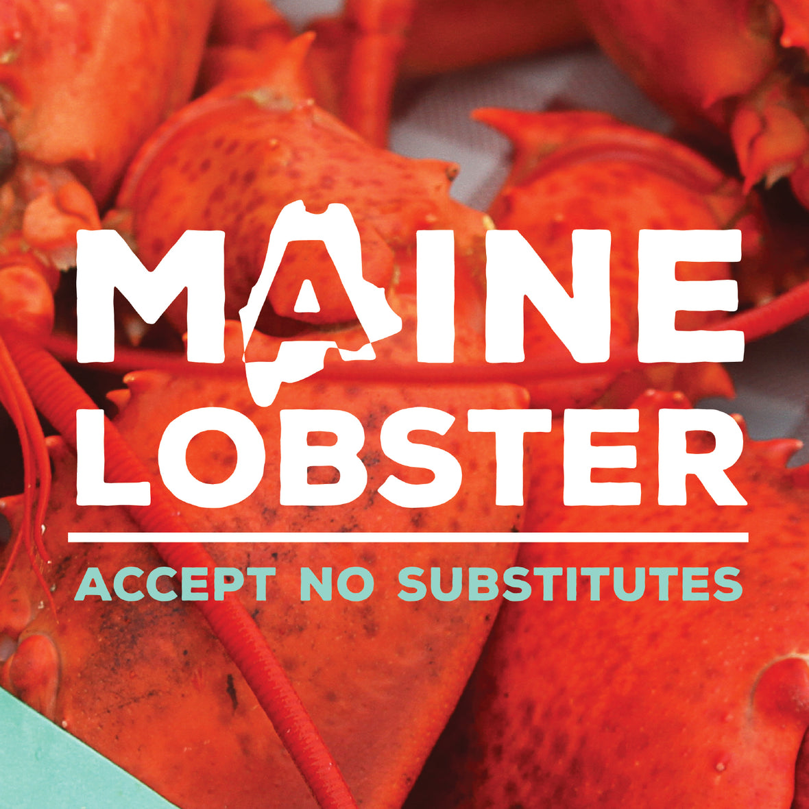 Maine Lobster Delivered Overnight