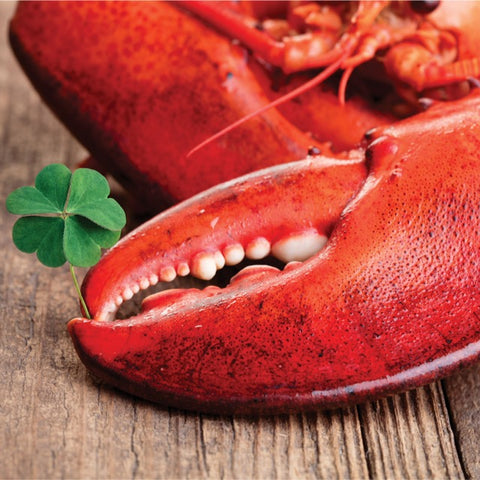 Saint Patricks Day Lobster Holiday