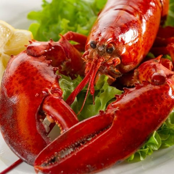 2 Lb Live Maine Lobster Large Lobster Big Lobster For