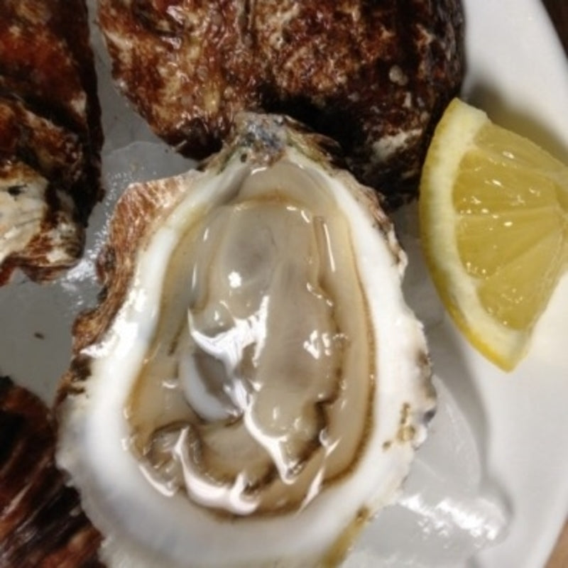 Bluepoint Oysters | Oysters For Sale | Buy Oysters Online ... - photo#50