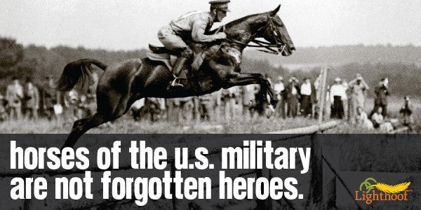 Honoring Horses on Veterans Day