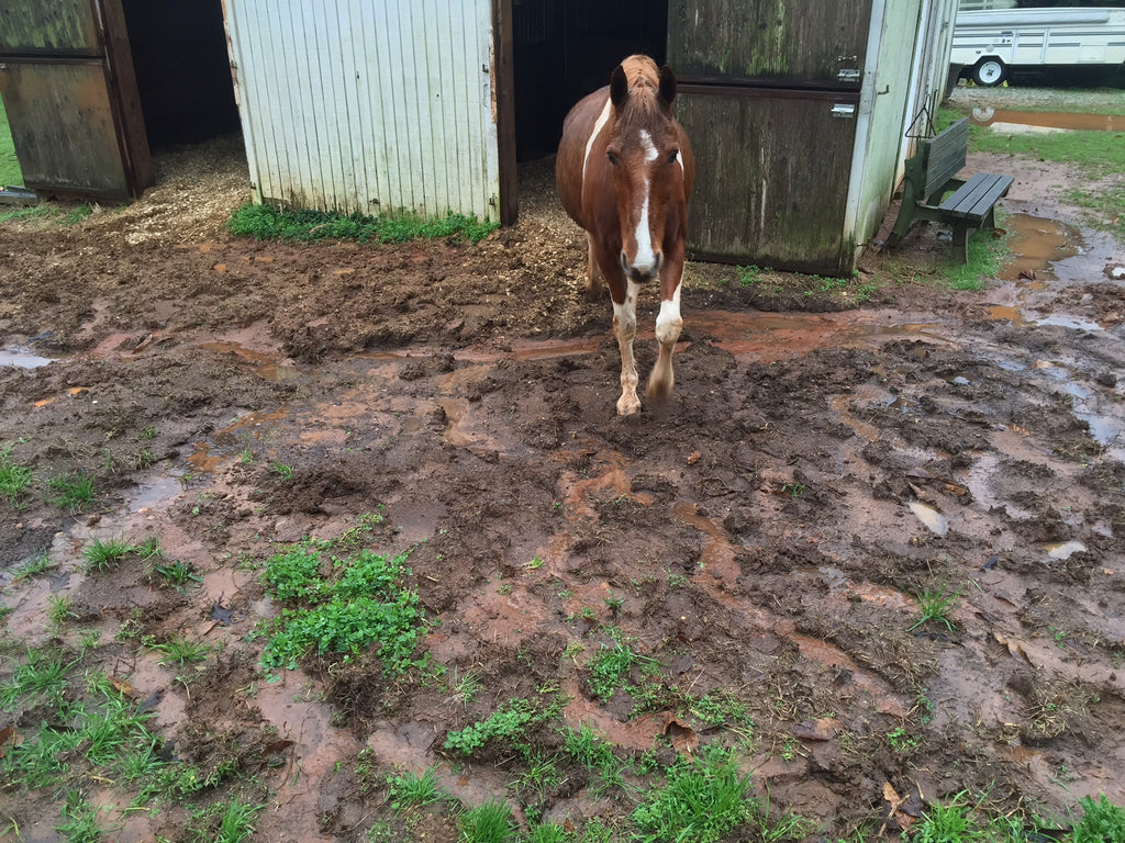 Do Your Horses Have a Mud Problem? Fixing It Isn't Complicated