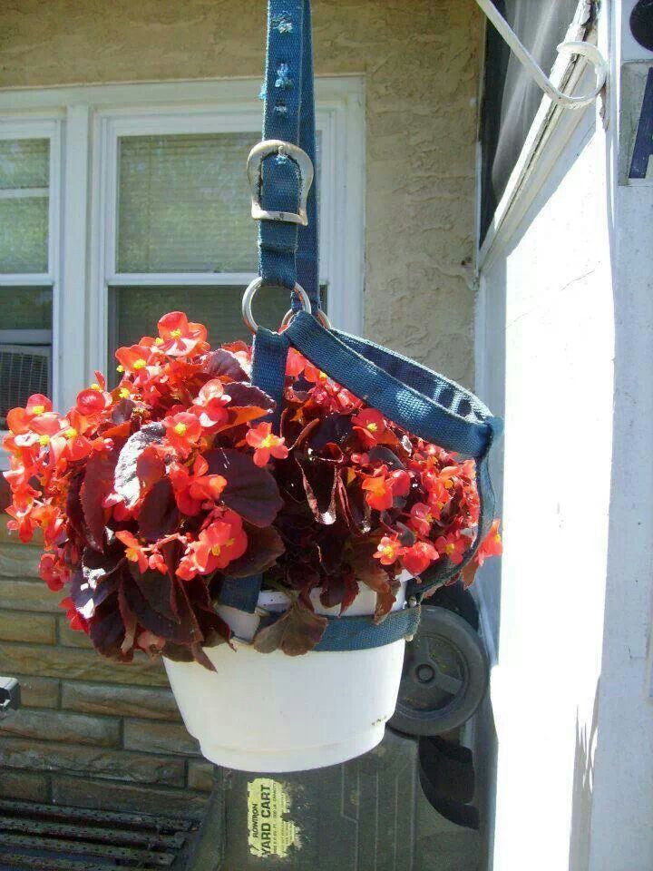Turn Old Horse Halters into Plant Hangers