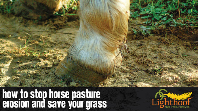How to Prevent Erosion in Horse Pasture Management