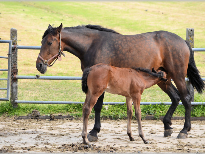 Preparing for Foaling Season - Getting Ready for Your New Arrivals