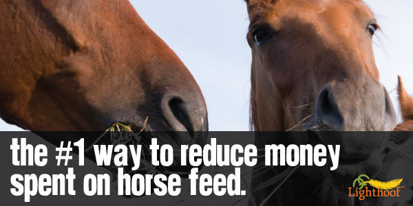 The #1 Way to Reduce Feed Costs