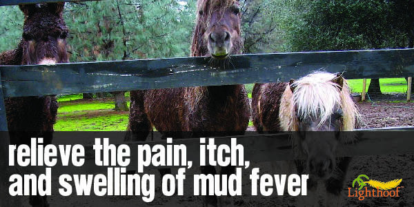 A Basic Mud Fever Treatment Plan
