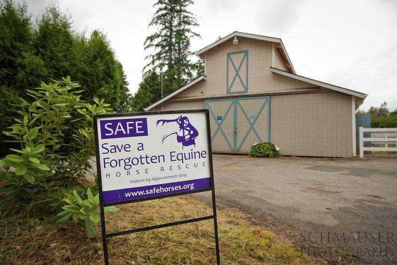 SAFE Horse Rescue's Lighthoof Project