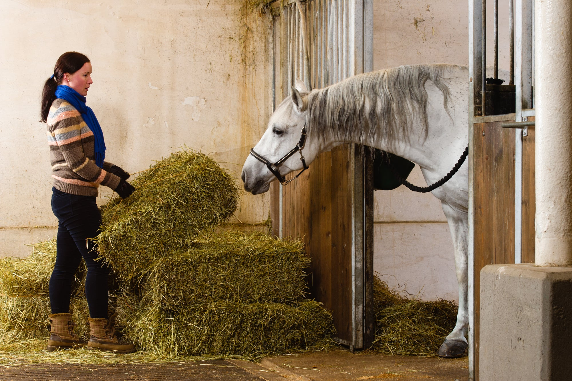 5 Ways to Design Your Stable to Save You Time on Chores