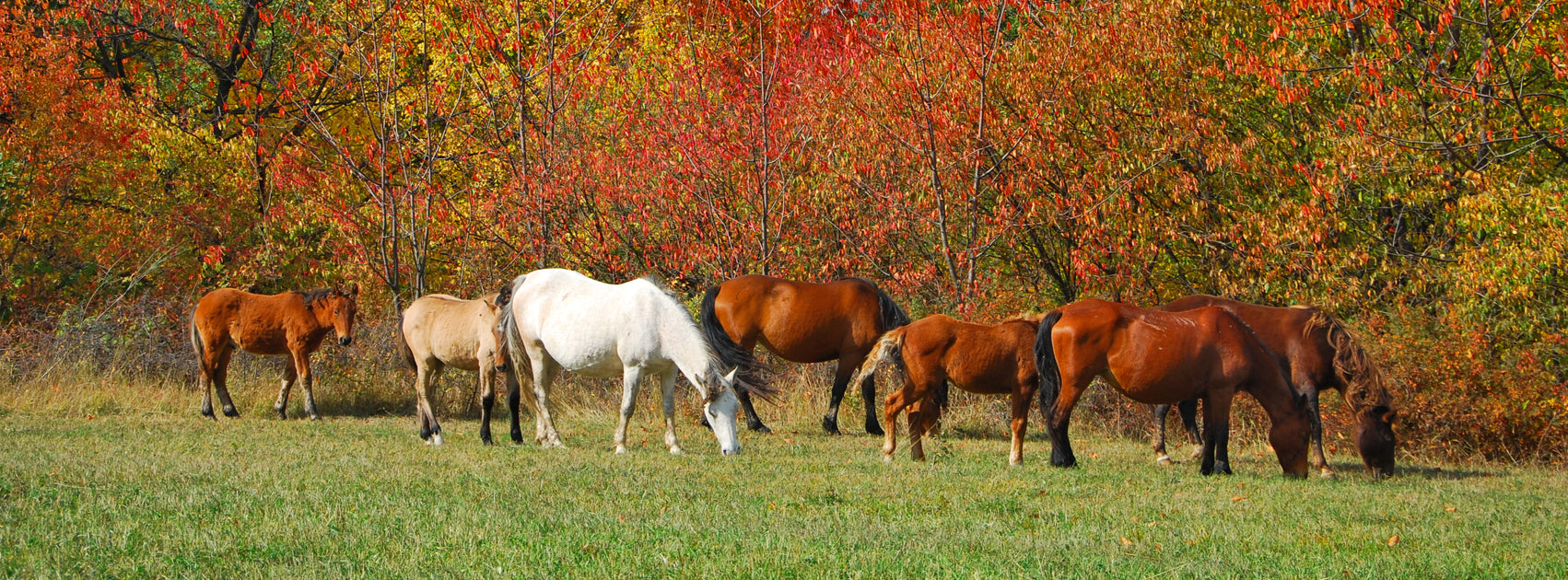 Fall Pasture Management: Preparing Your Fields for Next Year