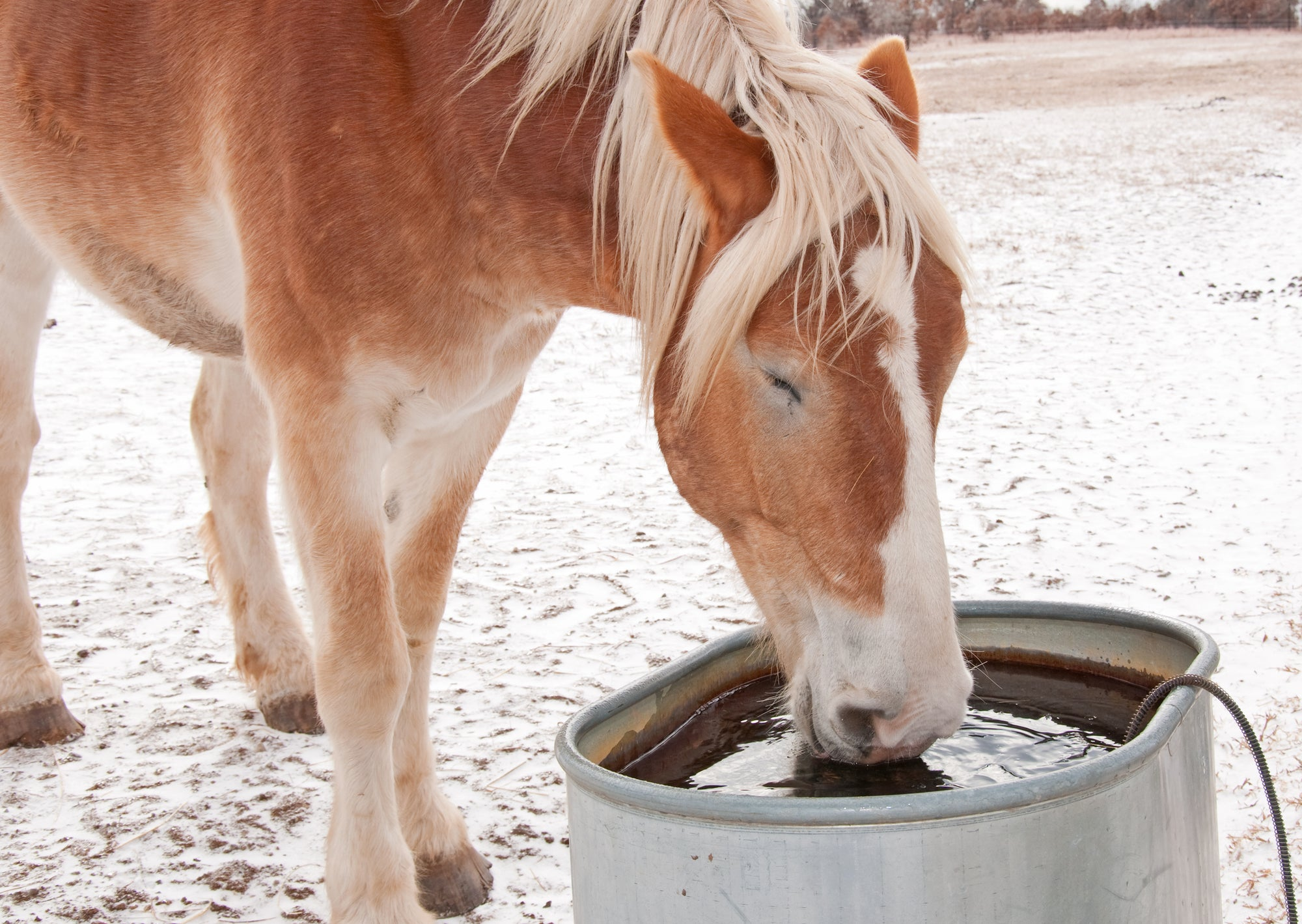 Heated water troughs for horses