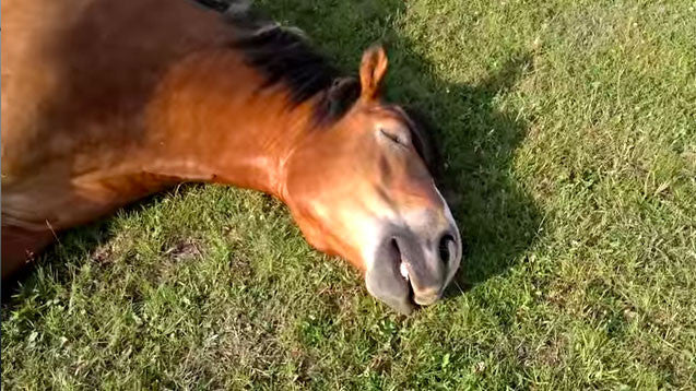 Snoring Horses? Just Too Cute!