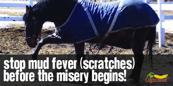 What Every Horse Owner Should Know About Mud Fever