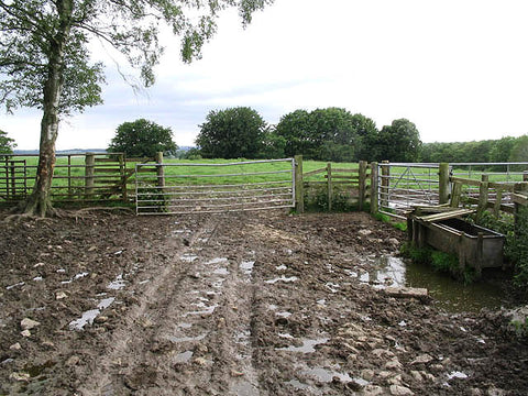 Mud is bad for Spring pasture management