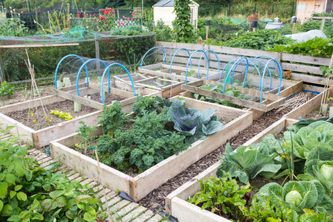 Plan your garden beds for your backyard homestead