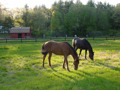 Slow feeders mimick the natural grazing habits of horses.