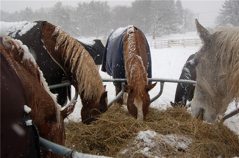 When the weather is cold, a great technique to warm your horses is to feed hay for additional calories and it creates heat from the digestion process.