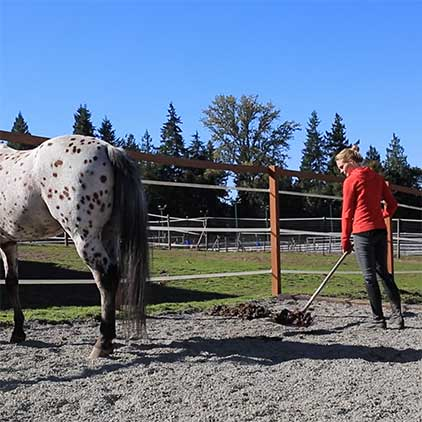 Easy Maintenance Horse Mud Control