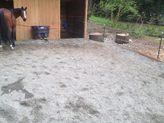 Horse standing in a dry paddock that uses Lighthoof at Owens Equine Sports Medicine.