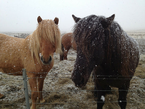 Shelter is important to prevent rain rot in horses