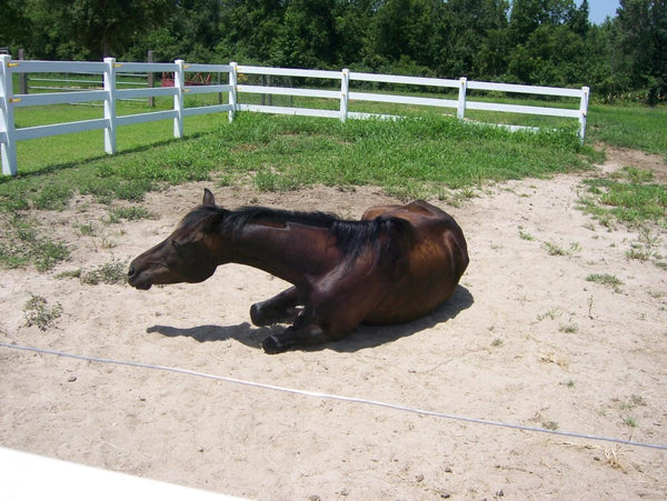 Using sand, you can create a special rolling area in mud-free paddocks.