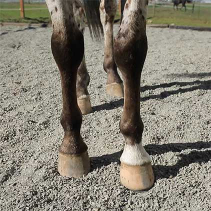 Lighthoof Equine Mud Management Panel -  - 8