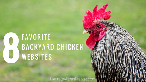 My 8 Favorite Backyard Chicken Websites